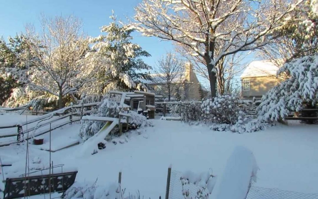 Let It, Snow! Advice for Winter-Proofing Your Garden