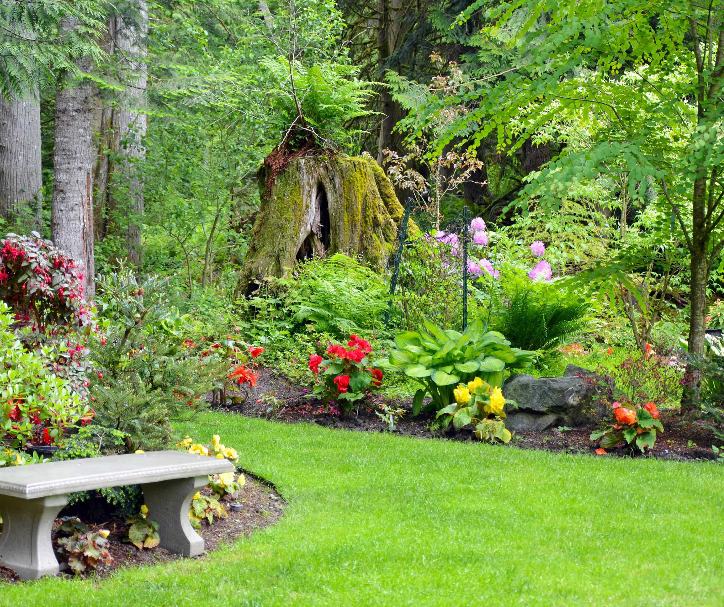 Domestic Garden